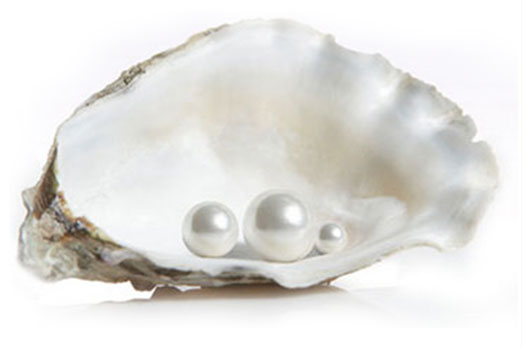 pearls in clam shell